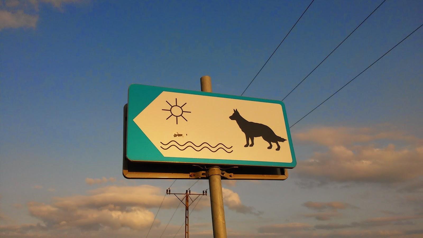 Plaża dla psów Kuźnica.