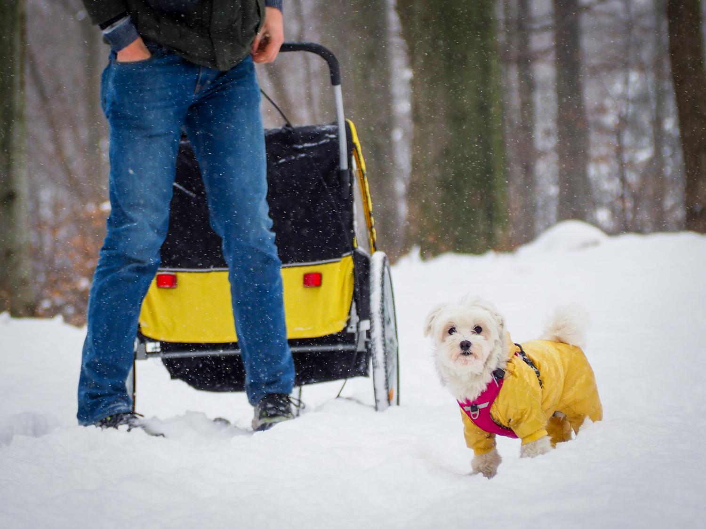 Pies na kołach – Lubinka, Dolina Izy.