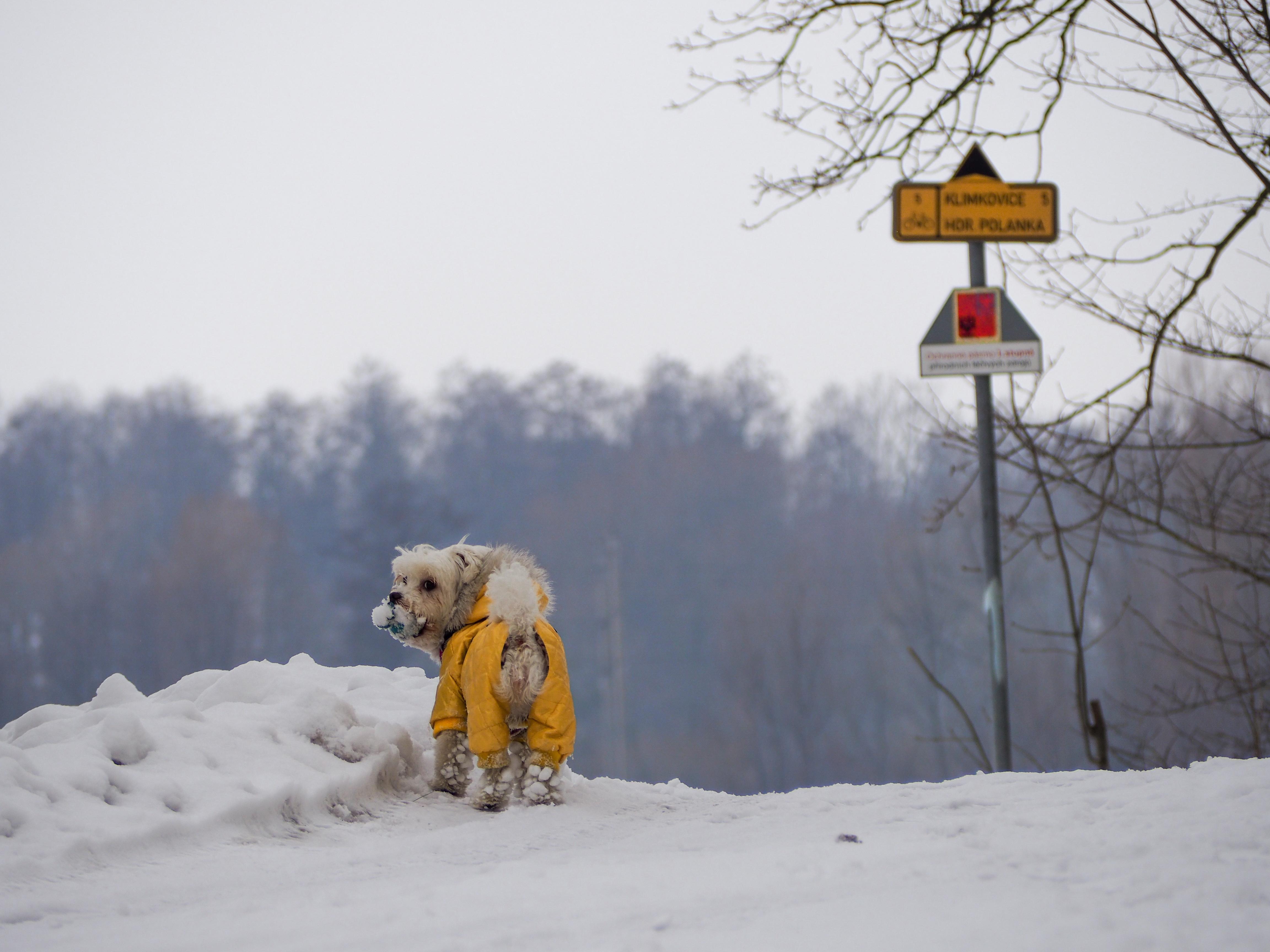 5 godzin w Ostrawie – oczywiście z psem!