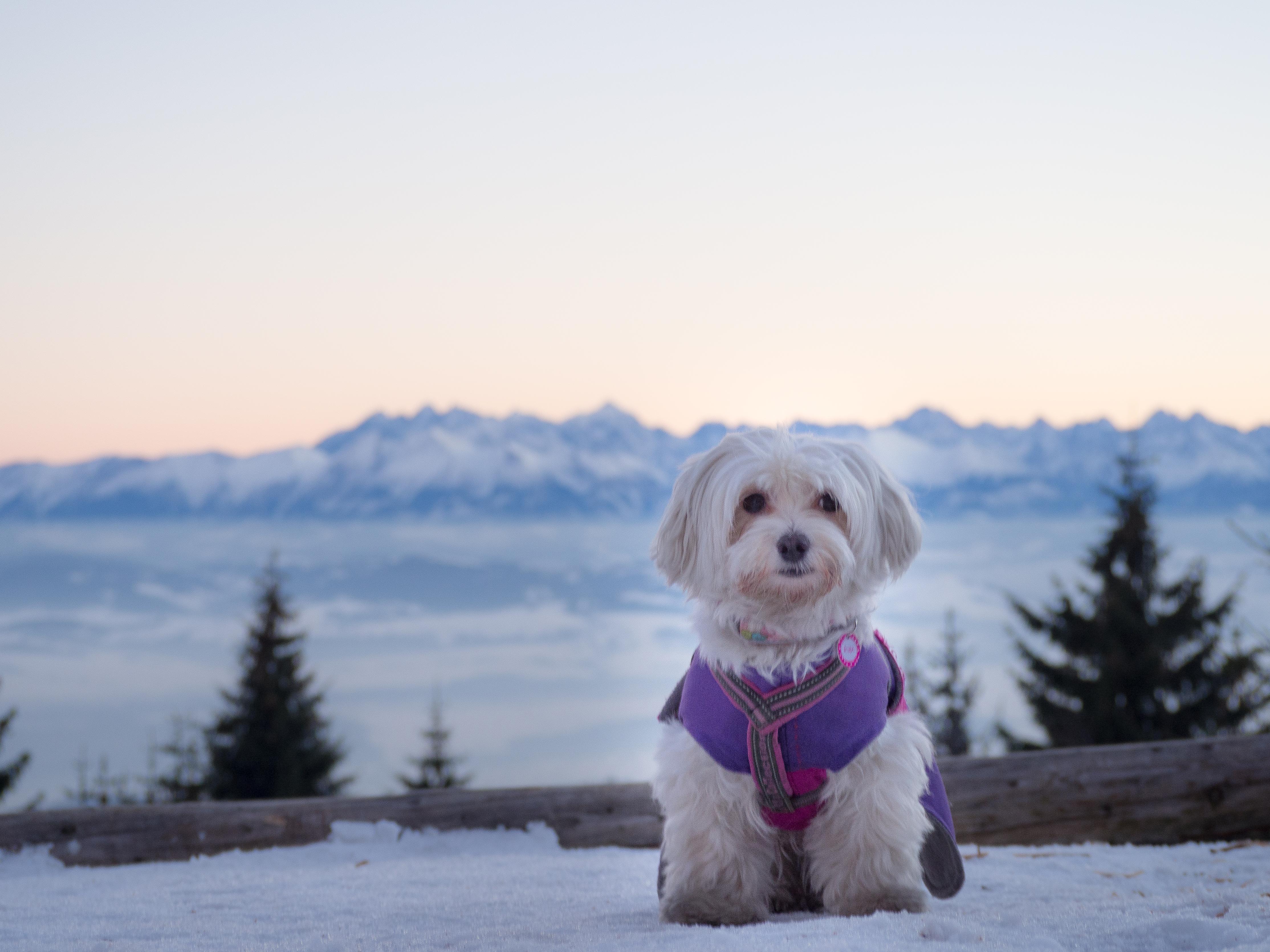 Z psem na Turbacz – wersja zimowa, skrócona.