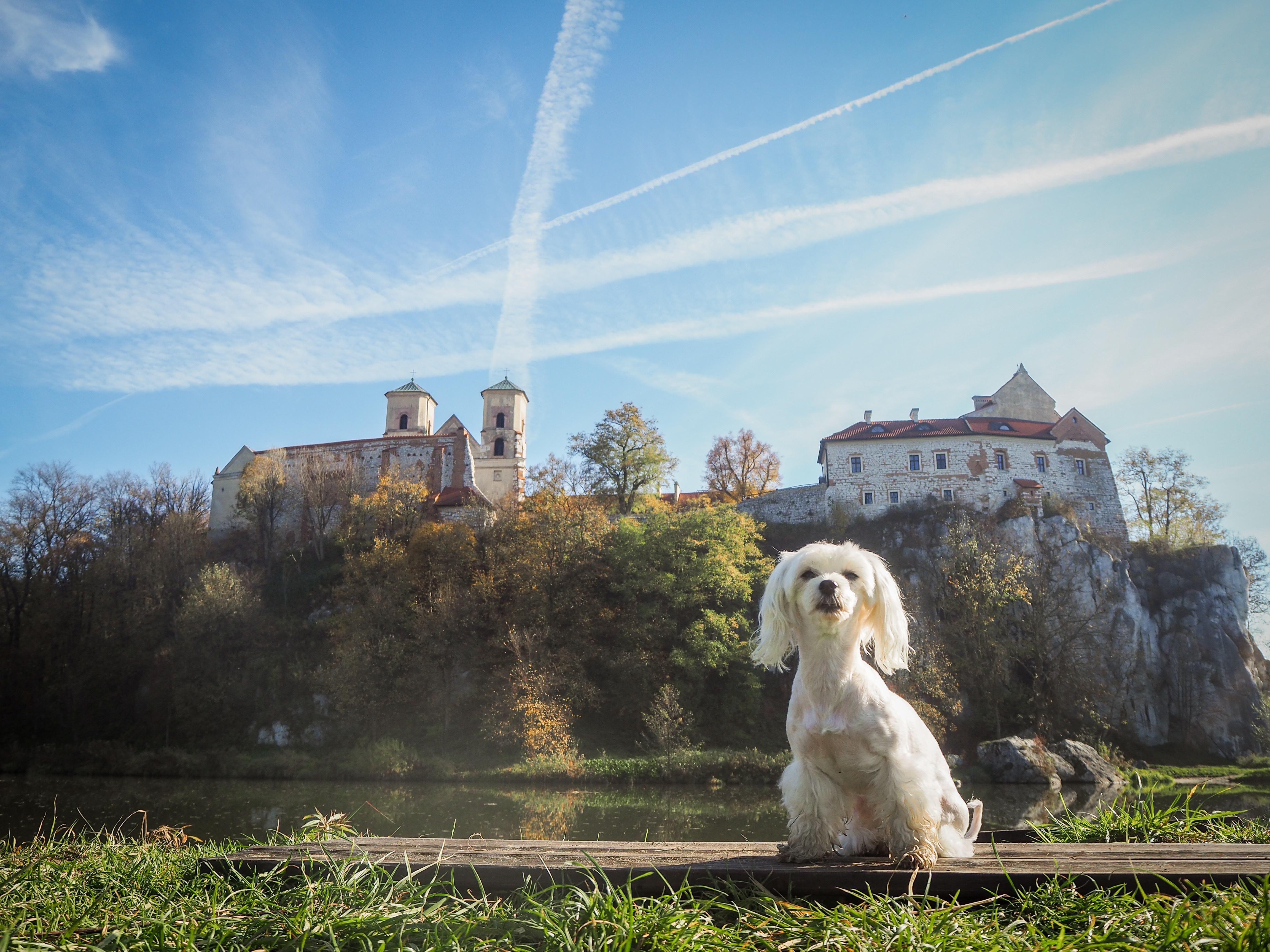 Kraków z psem. Piekary – punkty widokowe na Klasztor w Tyńcu